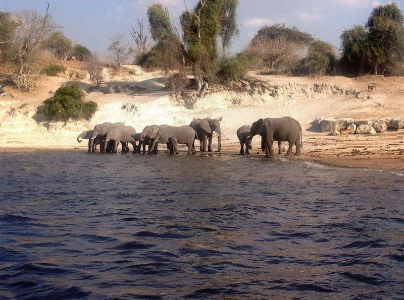 Safari am Sambesi