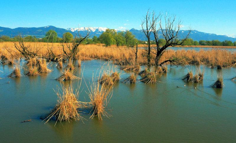 Der Bodensee - Wildnis am großen Wasser