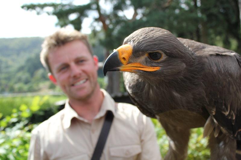 Der Falkenmann