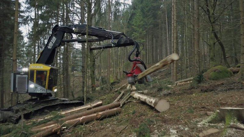 Einsatz am Limit - Knochenjob Holzfällen