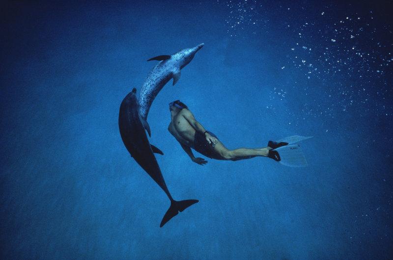Der Delfinjunge