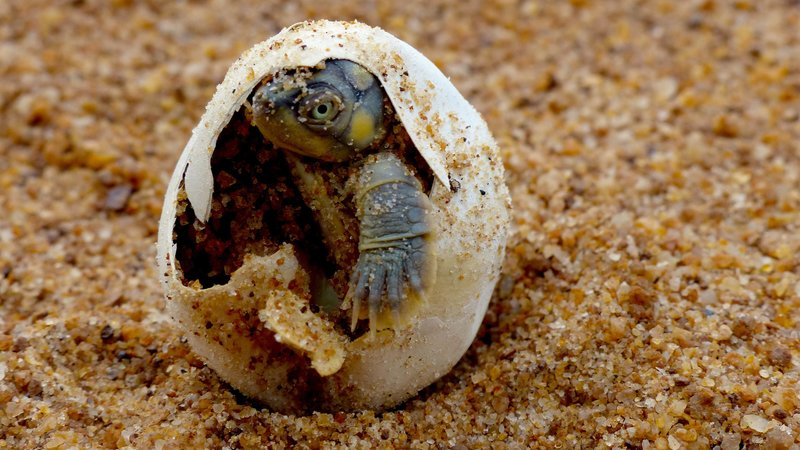 Turtle Hero - Ein Leben für die Schildkröten
