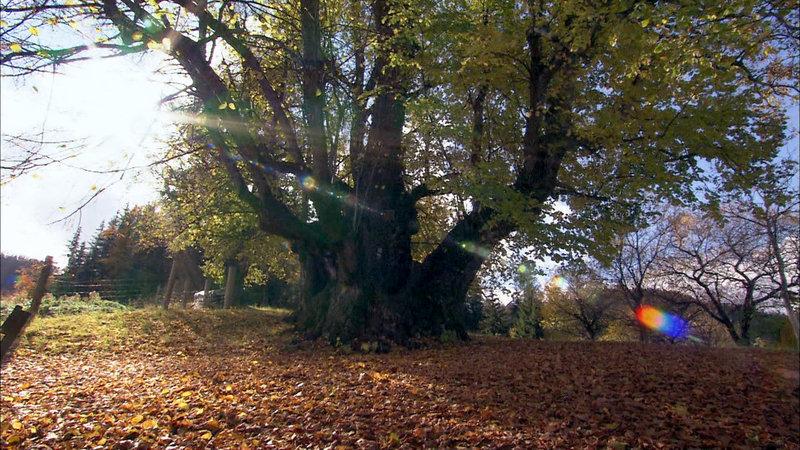 Die geheimnisvolle Welt der Bäume
