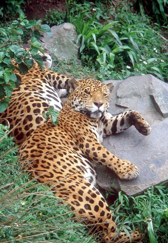 Das Geheimnis des Jaguars