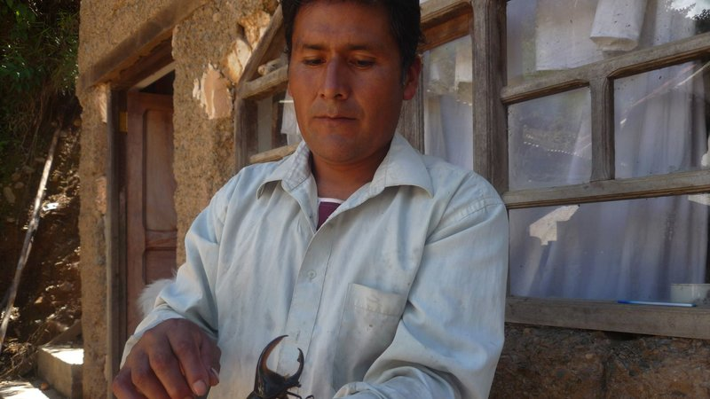 Bolivien - Kleine Käfer, großes Geld