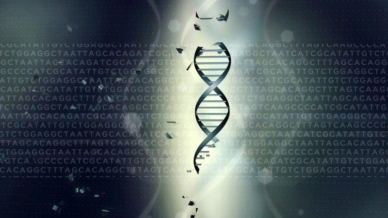 Genetisch vorbestimmt? - Wie unsere Gene uns beeinflussen