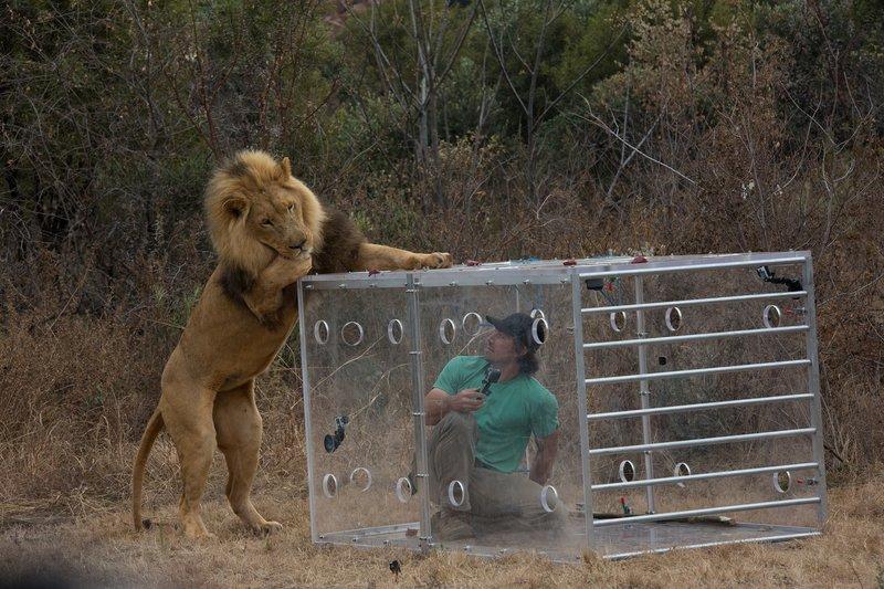 Mann gegen Löwe