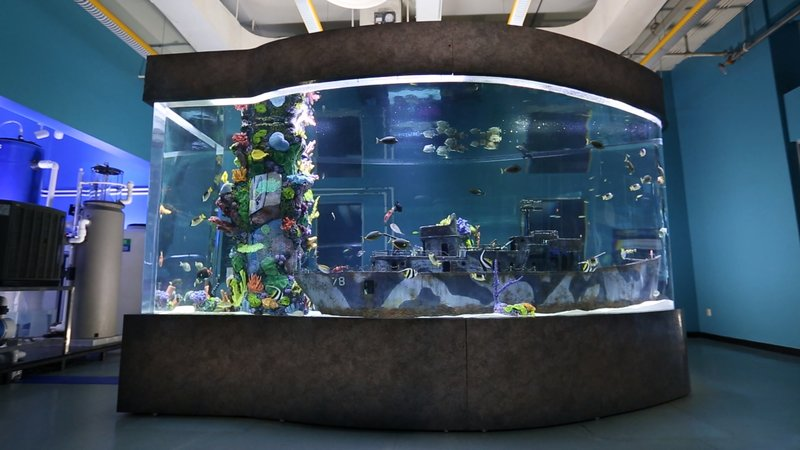 die aquarium profis bilder tv wunschliste. Black Bedroom Furniture Sets. Home Design Ideas