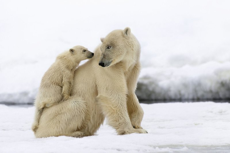 Der erste Winter: Wie Tierkinder die Kälte meistern