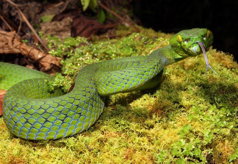 Schlangen In Südafrika