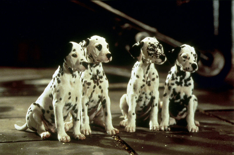 101 dalmatiner diesmal sind die hunde echt bilder tv wunschliste. Black Bedroom Furniture Sets. Home Design Ideas