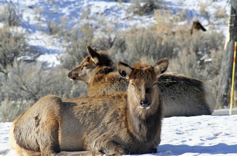 Weihnachten in Yellowstone