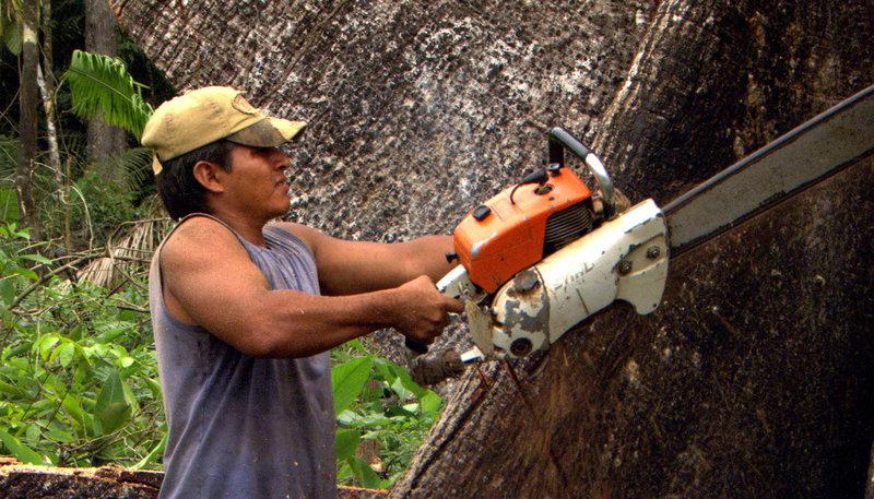 Mythos amazonas alarm im regenwald e03 tv wunschliste for Baumeister programm kg