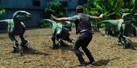 Eigentlich ist der ehemalige Navy-Soldat Owen Grady (Chris Pratt) für das Training der Velociraptoren zuständig, doch als ein neuer Dinosaurier erschaffen wird, soll er die Anlage des Indominus Rex begutachten und erkennt schnell, dass dieses Lebewesen durch seine Intelligenz sogar noch gefährlicher ist, als der T-Rex ...