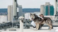 Kann ein Mensch um Anias (Lilith Stangenberg) Zuneigung zum Wolf konkurrieren?