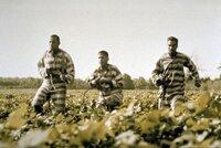 L-R: Delmar O'Donnell (Tim Blake Nelson), Pete (John Turturro) und Ulysses Everett McGill (George Clooney) auf der Flucht