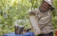 Bienenzucht und Honigproduktion ist eines der ertragreichen Geschäfte auf der Insel Hiiumaa / Estland