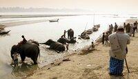 Die Elefantenbadeanstalt am Fluss.