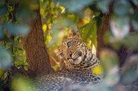 Jungtier Makumbi betrachtet sehnsüchtig den Riss seiner Mutter.