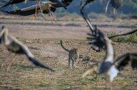Makumbi lernt, wie man Vögel jagt.