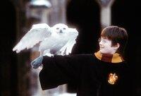 An seinem elften Geburtstag erfährt Harry Potter (Daniel Radcliffe), dass seine Eltern Magier waren und vom bösen Lord Voldemort ermordet wurden, als er noch ein Baby war - und er von nun an eine berühmte Zauberschule besuchen darf ...
