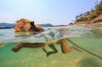 Makaken können unter Wasser sehen, was sie zu ausgezeichneten Tauchern macht.