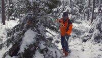 Kurz vor Weihnachten schlagen die Forstbetriebe in Waldsassen Christbäume, die kostenlos an Bedürftige abgegeben werden.