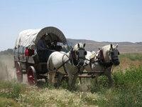 Planwagen-Tour auf dem Oregon Trail bei Scottsbluff, Nebraska: Gut vier Monate dauerte früher die Reise vom Mississippital bis Oregon.