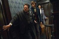 (v.l.n.r.) Jacob Kowalski (Dan Fogler); Newt Scamander (Eddie Redmayne); Tina Goldstein (Katherine Waterston)