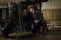 Newt Scamander (Eddie Redmayne)