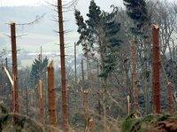 Am 18. Januar 2007, fegt der Orkan Kyrill in ganz Deutschland komplette Wälder weg. Mehr als 25 Millionen Bäume fallen allein in Nordrhein-Westfalen. Besonders betroffen ist das Sauerland. Ein einschneidendes Erlebnis für die Menschen, die von ihm leben.