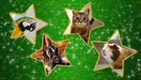 (1. Staffel) - Game of Pets - Artwork