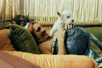 Numerobis bittet Obelix (Gérard Depardieu) und dessen Freunde, ihm bei Bau des Palastes zu helfen.