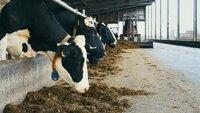 Sternekoch Nelson Müller deckt auf, wie frisch, gesund und industrialisiert unsere Milch ist. Er geht dafür melken und macht einen Laktoseintoleranz-Test - mit erstaunlichem Ergebnis.