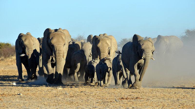 Arena der Elefanten