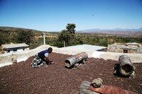 Äthiopien - Heimat des Kaffees 309 Kaffeebohnen trocknen nach der Ernte traditionell auf den Dächern SRF/MedienKontor/J. Michael Schumacher