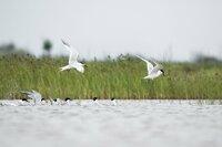 Der 2016 verstorbene Ornithologe und Mitbegründer des WWF Luc Hoffmann nutzte sein Vermögen (Hoffmann-La Roche), um weltweit Projekte zur Erhaltung von Feuchtgebieten zu finanzieren, die für die biologische Vielfalt notwendig sind. Seine Auffassungen entwickelten sich im Laufe der Jahrzehnte zu einer globalen Vision, die menschliche Tätigkeiten in die biologische Vielfalt einbezieht.
