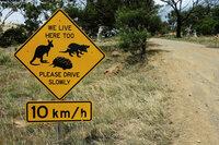 MareTV Tasmanien - Australiens grösste Insel Der Verkehr gefährdet die Tierwelt Tasmaniens, wie Zwergkängurus, Quolls und Wombats. SRF/NDR/Steffen Schneider