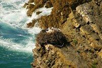 Störche vom Cabo Sardão