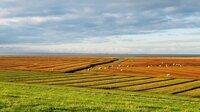 Schafe halten nicht nur die Deiche in Ordnung, auch das Deichvorland - am imposantesten im Norden der Insel. Von dort schweift der Blick über die Halligen Hooge und Langeneß.