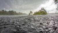 Der Regenwald des Amazonas