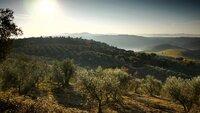 Beeindruckende Toskana am frühen Morgen bei Artimino.