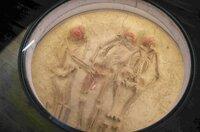 Abdruck einer Mehrfachbestattung im Pawlow-Museum: Die Stätten, von denen die meisten nach aktuellem Erkenntnisstand vor rund 25.000 Jahren entstanden, weisen üppige, für den heutigen Betrachter äußerst unerwartete Verzierungen auf.