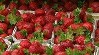 Erdbeeren im test - Rot, saftig und geschmacklos?  Wie Händler mit den süßen Früchten tricksen.