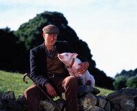 Das kleine Ferkel Babe landet durch Zufall auf dem Bauernhof des Farmers Hoggett (James Cromwell) ...