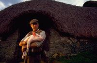 """Als es dem Schweinchen Babe eines Tages gelingt, Viehdiebe vom Hof zu vertreiben und die Schafe zu beschützen, glaubt Babe, seine Berufung gefunden zu haben und will """"Schäferschwein"""" bei Arthur Hoggett (James Cromwell) werden ..."""