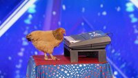 Ein Huhn, das Klavier spielt.