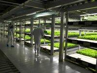 """Vertikale Landwirtschaft oder """"vertical farming"""" ist ein Begriff der Zukunftstechnologie, die eine tragfähige Landwirtschaft und Massenproduktion pflanzlicher und tierischer Erzeugnisse im Ballungsgebiet der Städte in mehrstöckigen Gebäuden ermöglichen soll. Sie ist damit eine Sonderform der urbanen Landwirtschaft."""