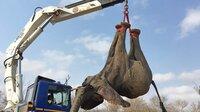Elefant hängt an einem Kran