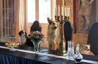 Ein königliches Hundeleben - bei der Geburt wurden die Königskinder von der bösen Königinmutter durch Hunde ersetzt.